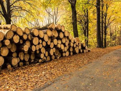 交换空间家居给大家聊一聊实木的那些些秘密